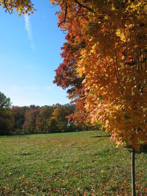fall-and-puppy-001.jpg