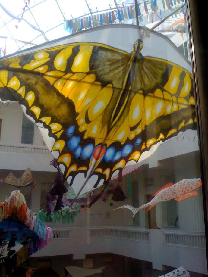 butterfly-museum