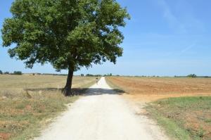 isa and tree walk